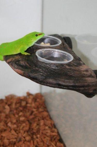 """MagNaturals Bol à gecko 9 X 4.75"""""""