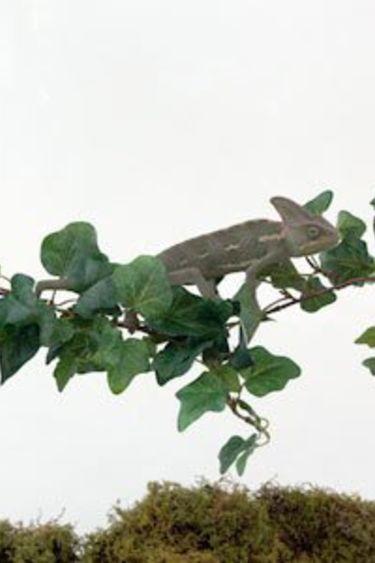 MagNaturals Pont de vigne de la jungle