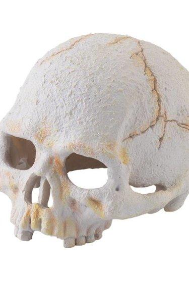 Exoterra Crâne de … - Skull of…