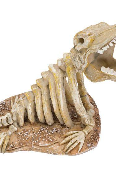 Squelette jurassic