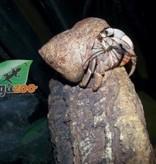 Magazoo Bernard l'hermite Large
