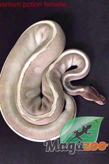 Magazoo Python Royal Phantom Potion Femelle