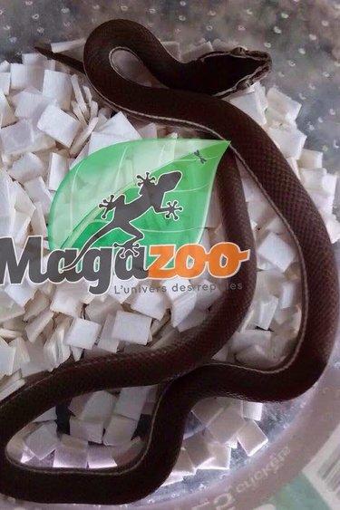 Magazoo Serpent des maisons ligné