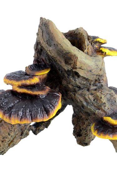 Treasures underwater Racine avec champignons - Moyenne
