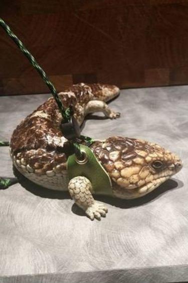 Harnais noir pour reptile poitrine