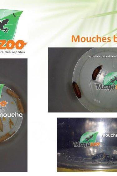 Magazoo Mouche bleue