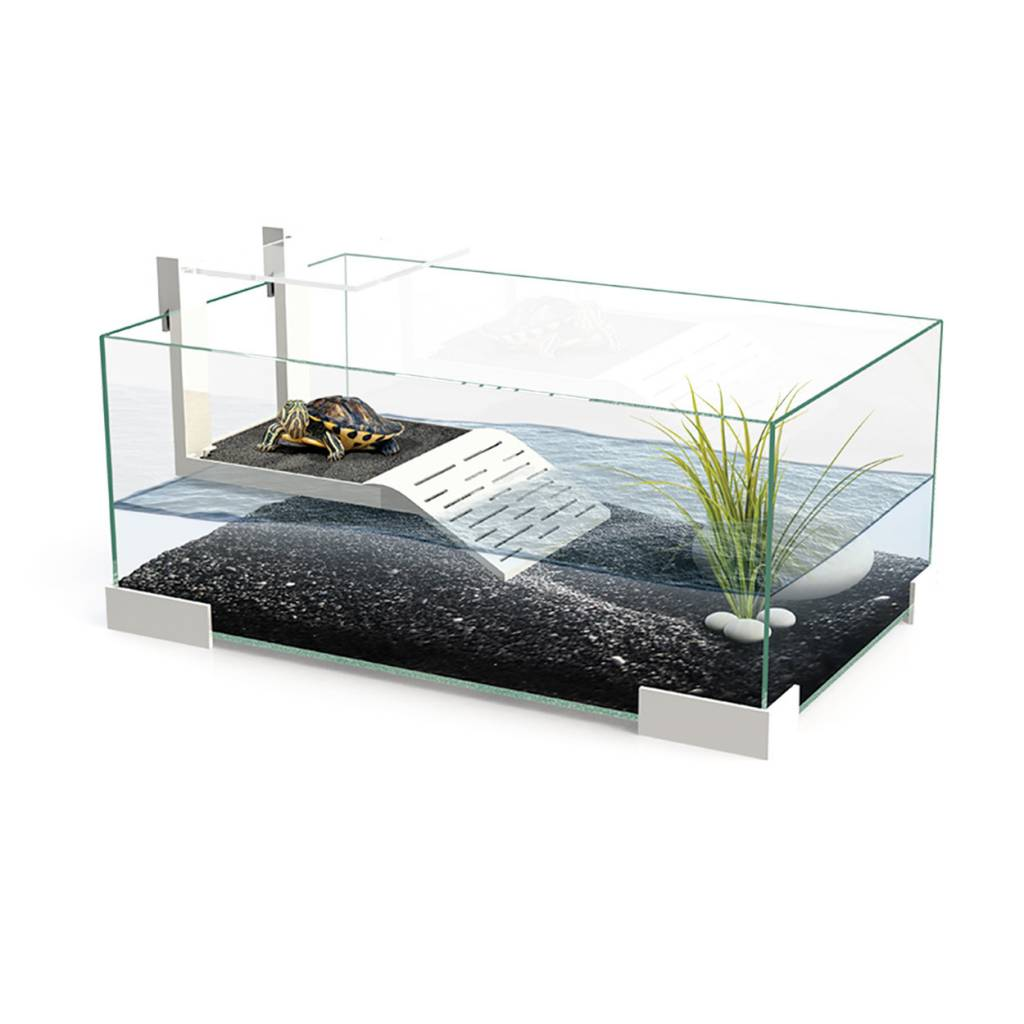 Aquarium contemporaine pour tortue magazoo l 39 univers for Aquarium tortue
