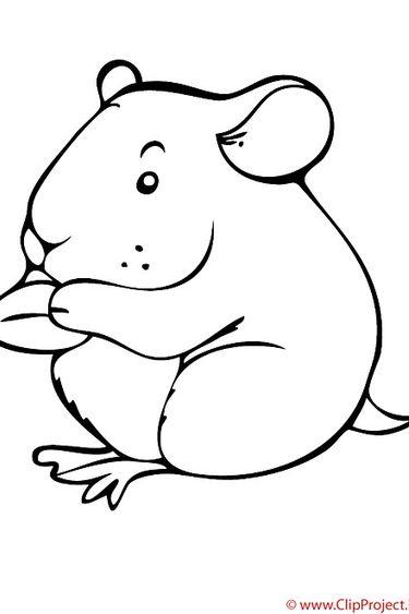 Magazoo Hamster vivant