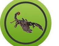 Scorpion - Centipède