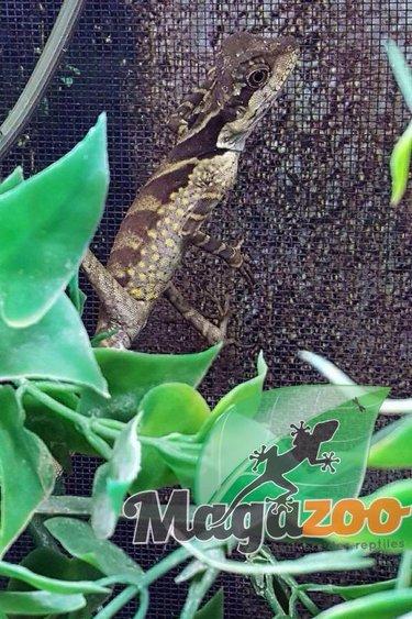 Magazoo Dragons géant des Forêts bébé