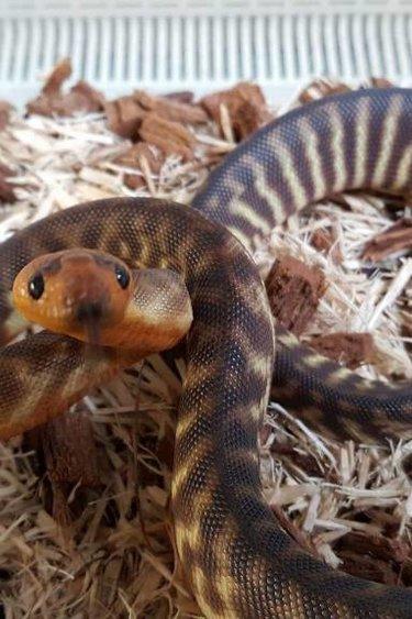 Magazoo Python Woma  bébé mâle