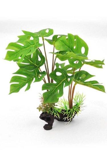 Origins Plante feuilles divisées - Split leaf
