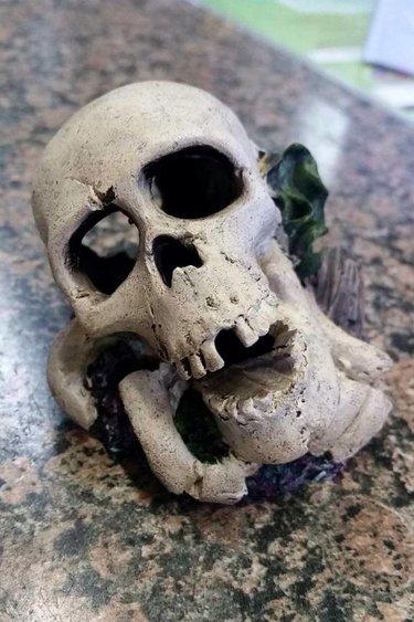 Magazoo Crâne Humain petit
