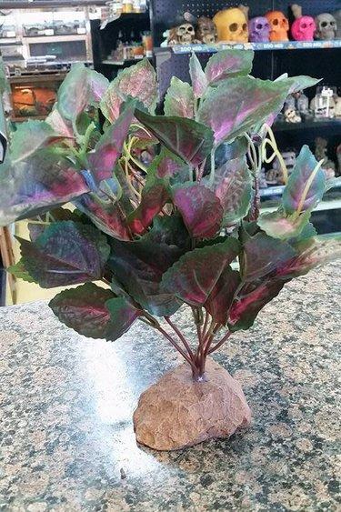 Magazoo Plante rouge