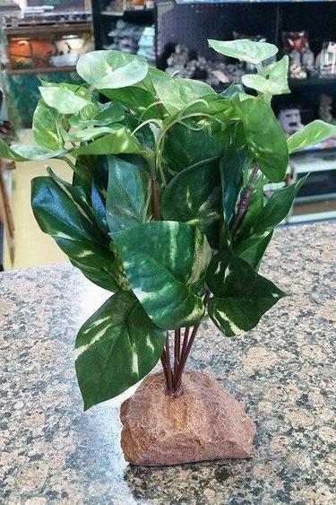 Magazoo Plante verte foncée