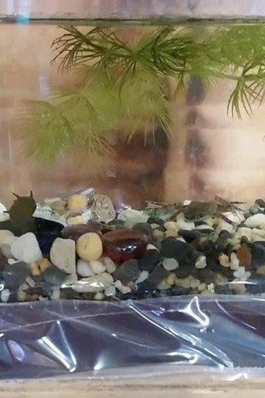 Magazoo Aqua bébé grenouille