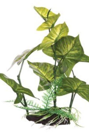 Fluval Plante anubias gracile  moyenne avec base