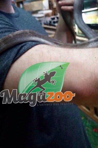 Magazoo Python réticulé golden child platinum het purple albino mâle  2016