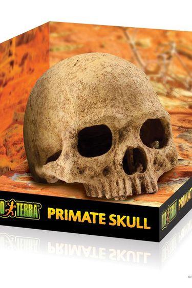 Exoterra Cachette en forme de crâne de primate