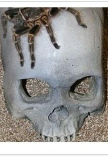 MagNaturals Caverne en crâne