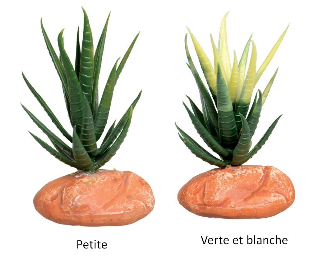 planter une aloe vera l 39 aloe vera une plante d polluante cultiver chez soi comment prendre. Black Bedroom Furniture Sets. Home Design Ideas