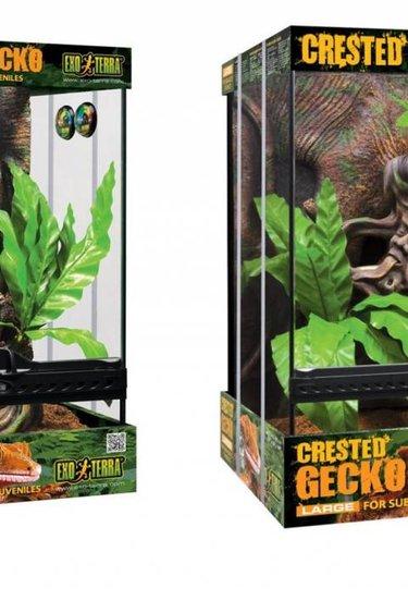 Exoterra Terrarium équipé pour gecko à crête