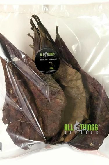 All things reptile Feuilles d'amandes indiennes (Terminalia catappa) Grade A 10-12 feuilles