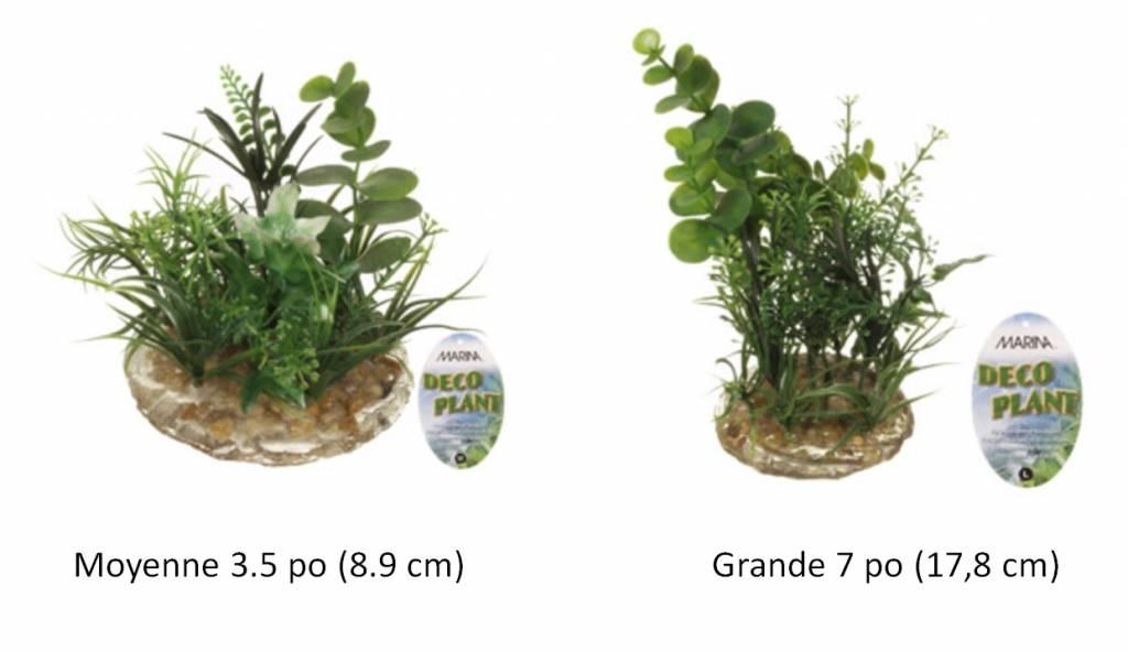 Marina Indian Almond Leaves ( Terminalia catappa)   - Plante décorative DECO PLANT  pour aquarium