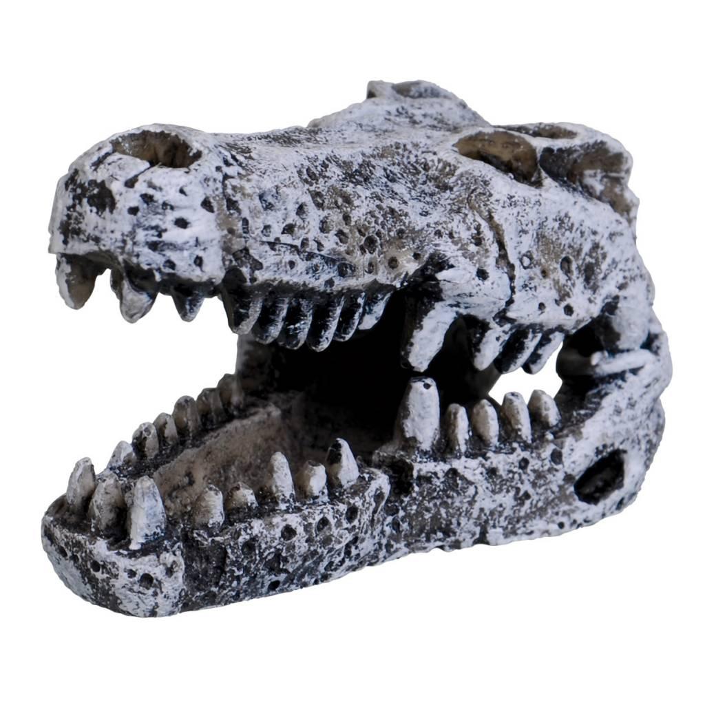 Treasures underwater Crâne de Crocodile - Mini - Crocodile Skull