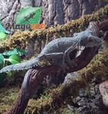 Magazoo Gecko à Queue de Feuille Mâle