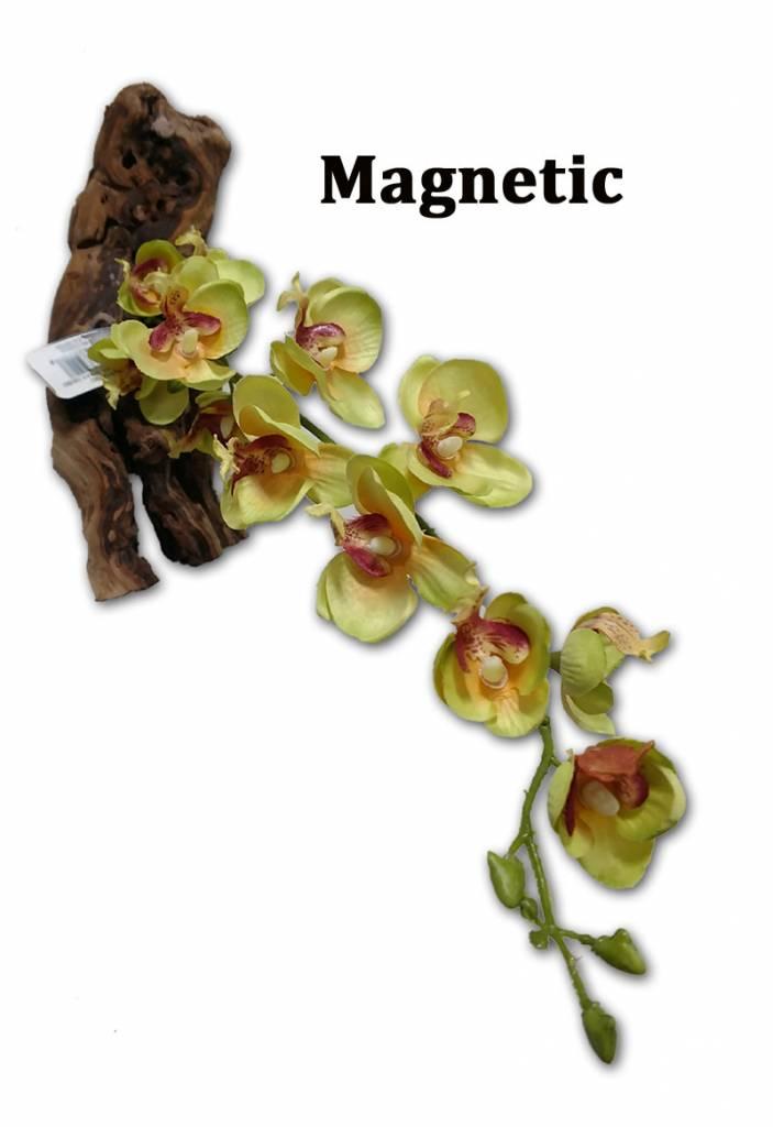 MagNaturals Orchidée blanche magnétique - White Orchid 15''