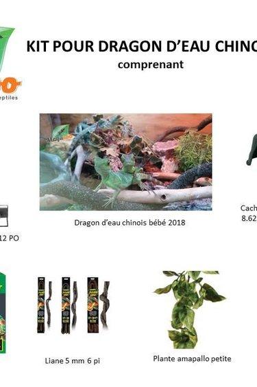 Magazoo Kit bébé dragon d'eau chinois (lézard inclus)