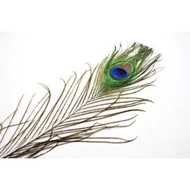 SA Feathers Peacock Feather
