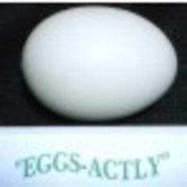 Eggsactly Egg - Small Solid Egg