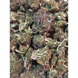 Terp Nation CBD Hemp Flower Boax Hybrid 7 Grams by Terp Nation