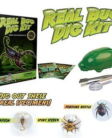 DR. COOL:  Insect Dig Kit