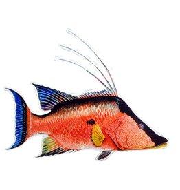 10 Hogfish Sticker