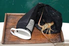 Lobster Hotel Half & Half Bottom Zipper
