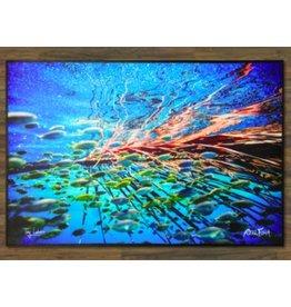 """Realfish H20 Series: School of Fish """" Undercover """" Floor Mat 24x36"""