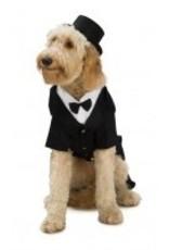 Dog Costume Dapper Dog Medium
