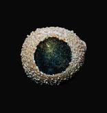 Chameleon Glass Chameleon Hand Pipe - Geode-Lapp'd Dichro - Green