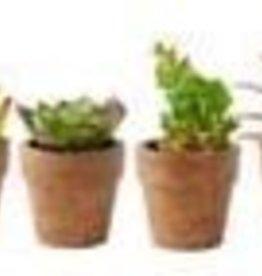 K & K Interiors, Inc. ASST Succulents in Brwn Paper Pot