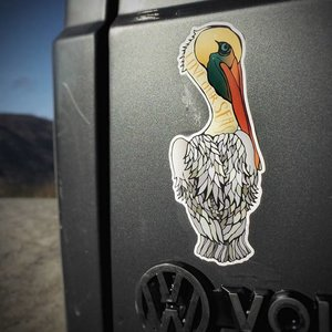 Pelican- Decal