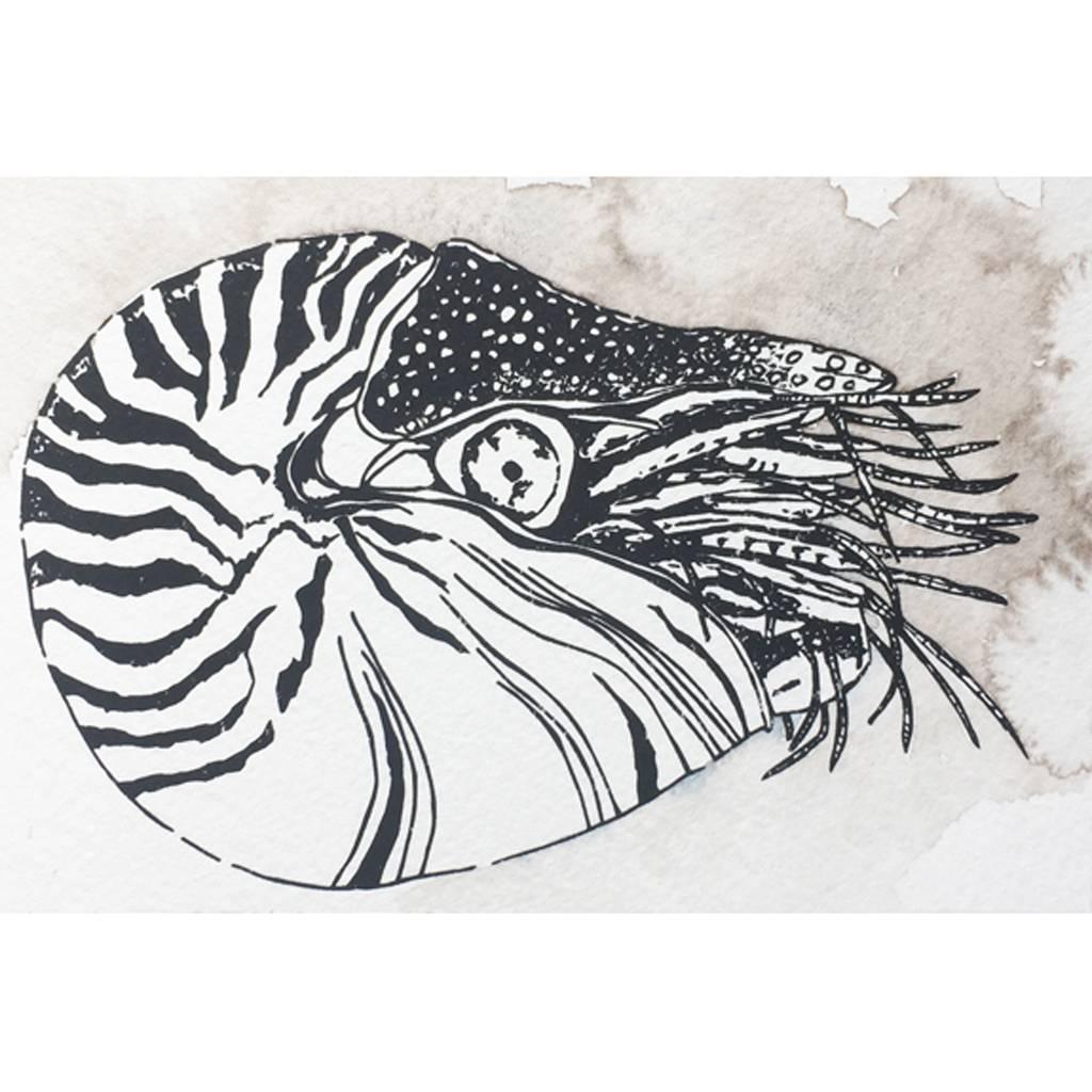 Nautilus- Octopus Ink Watercolor