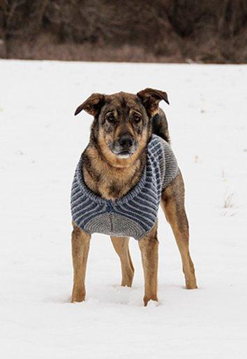Wool & Co. Feature Pattern of the Week  - Bird Island Dog Sweater