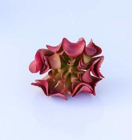 3.5 Inch Succulent