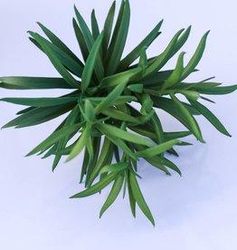 7.25 Inch Succulent