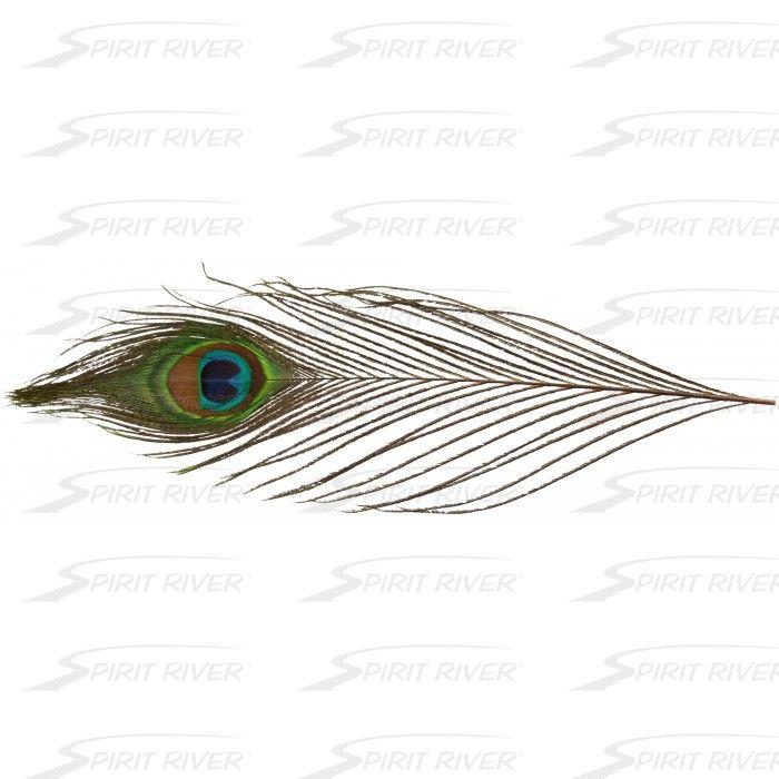 UV2 Peacock