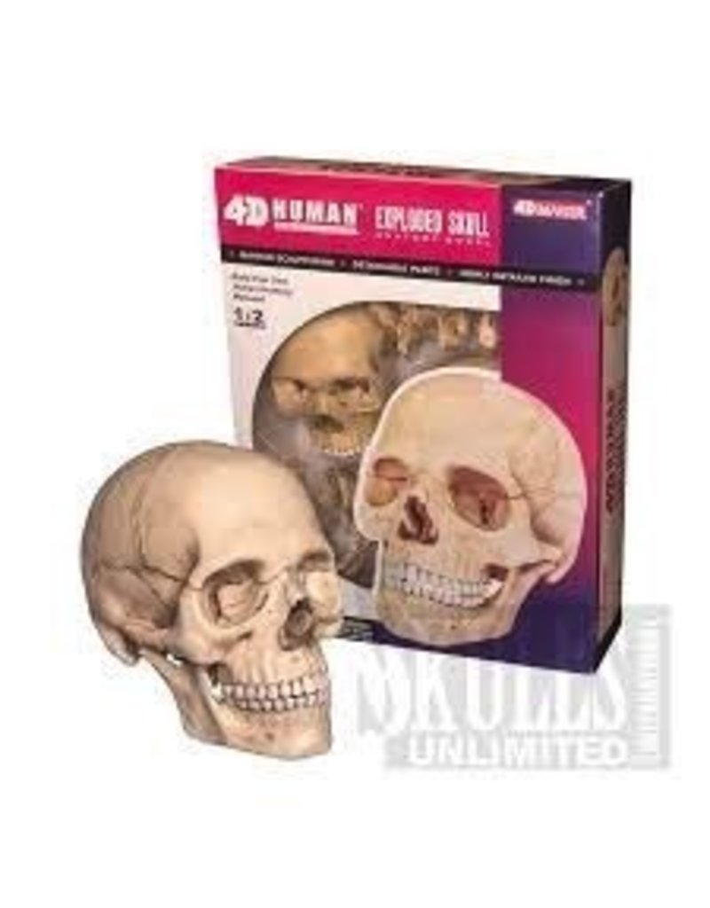 4d Human Anatomy Exploded Skull Anatomy Model Elephant Thoughts