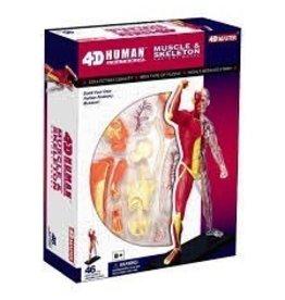 4D Human Anatomy Muscle & Skeleton Anatomy Model